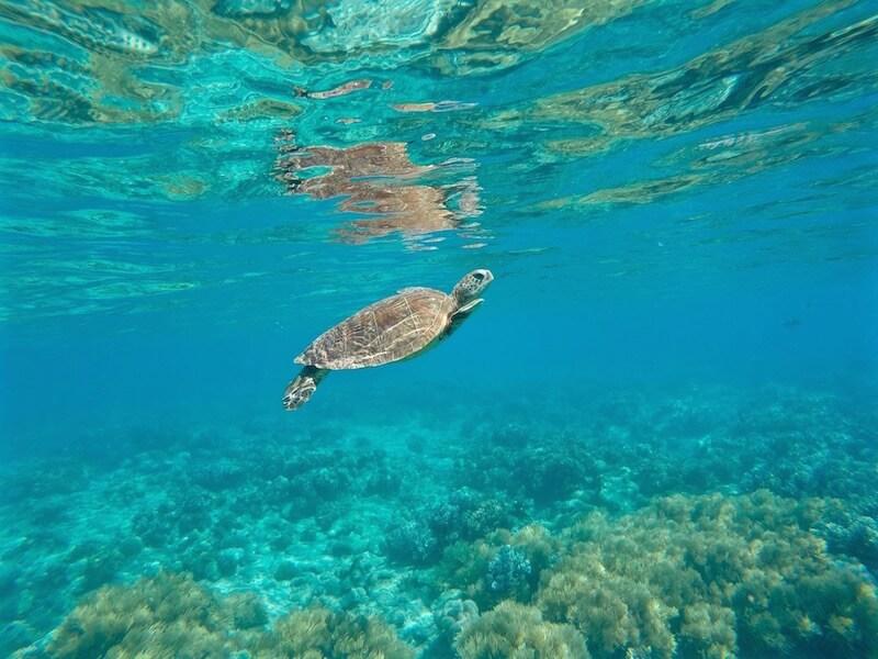 Tartaruga Green Island