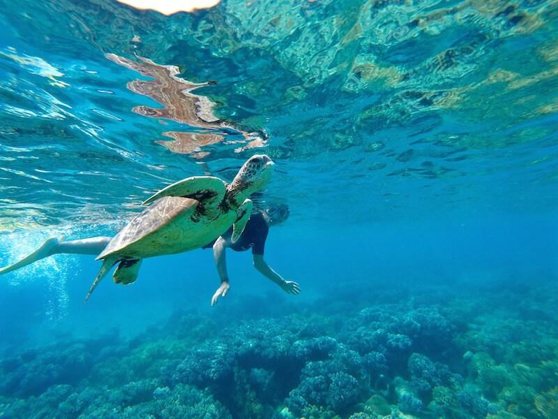 tartarughe-marine