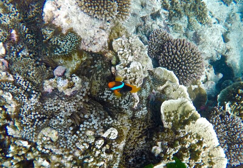 Nemo Lady Elliot Island