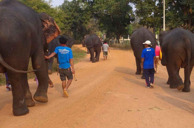 Elefanti del surin Project