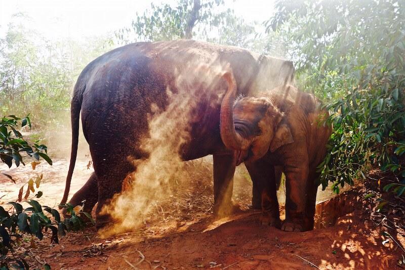 Fare volontariato con gli elefanti