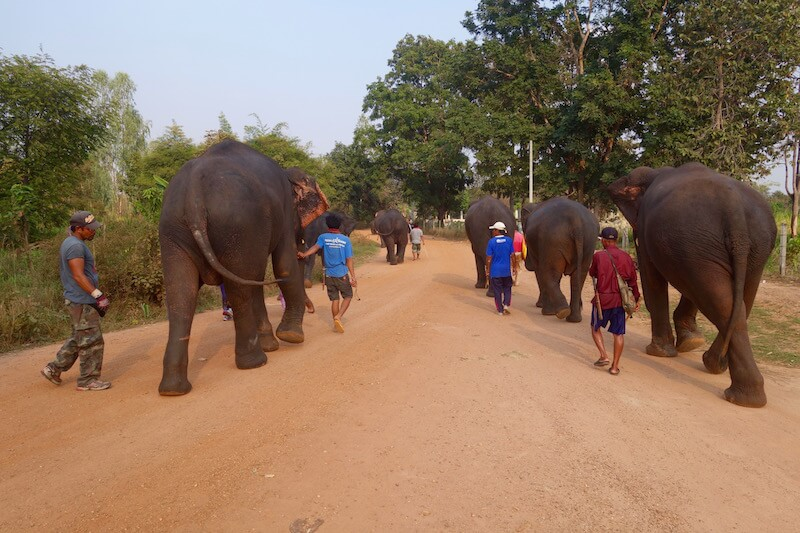 Mohouts e elefanti