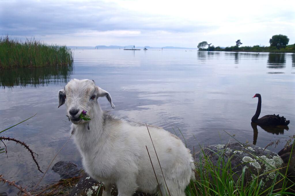 Il lago Taupo
