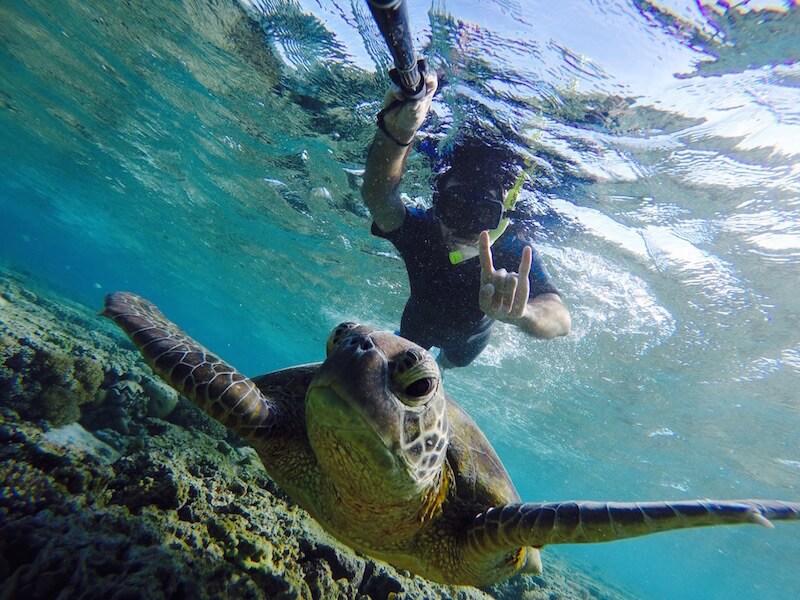 Tartatura marina nella Grande Barriera Corallina
