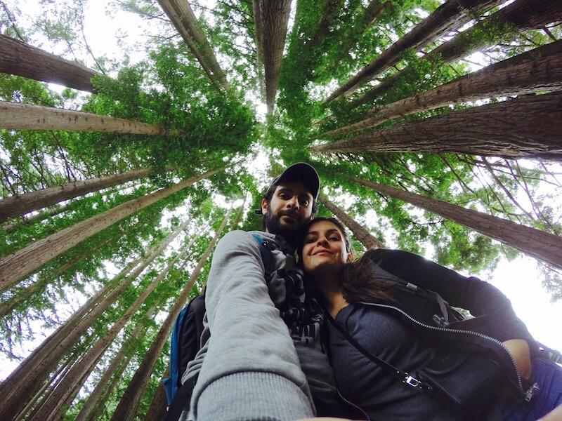 La foresta di redwood nel Rotorua