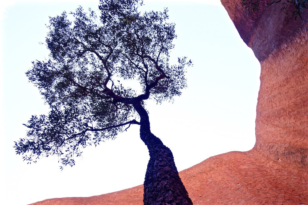 albero ayers rock