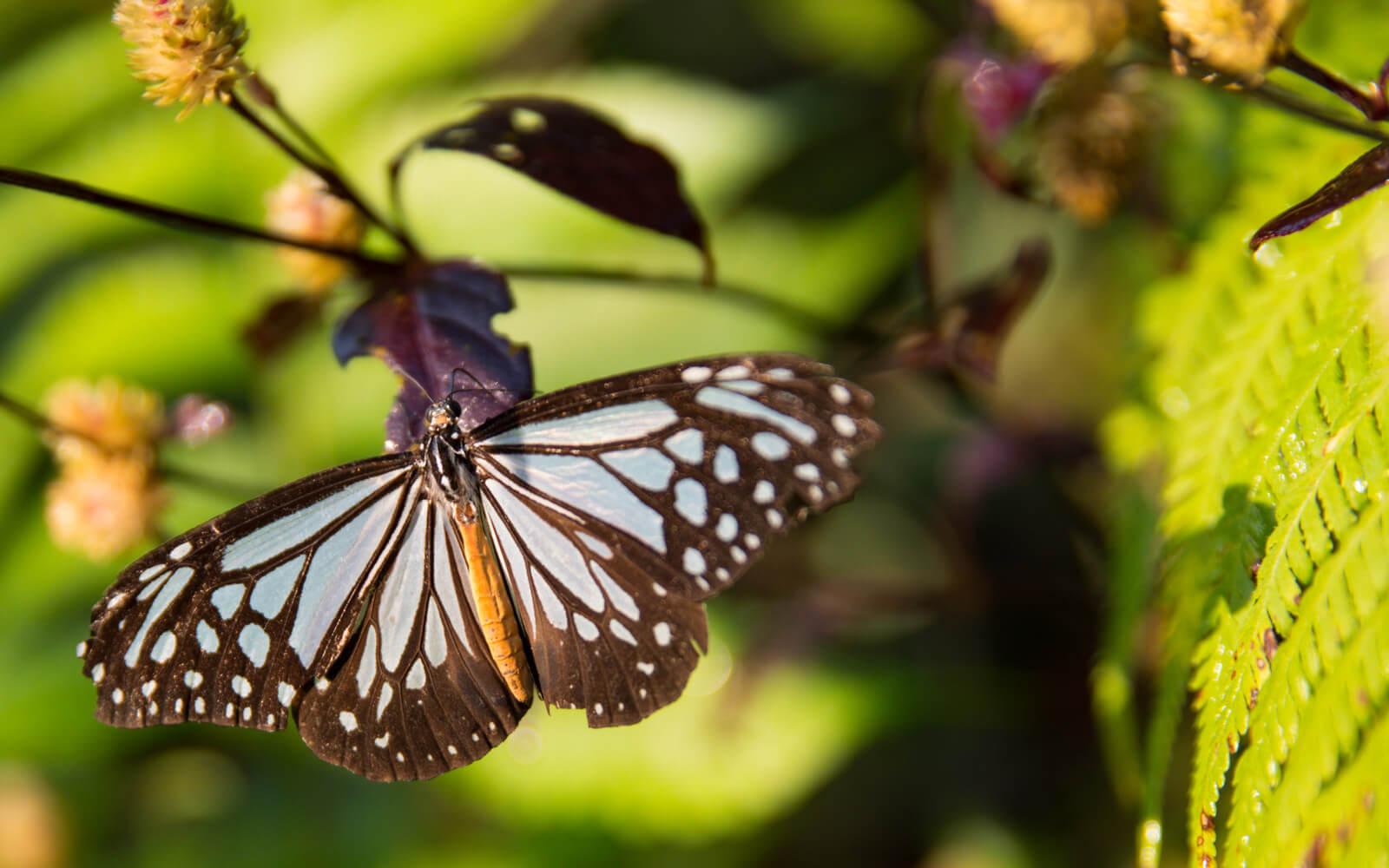 Butterfly Park Luang Prabang