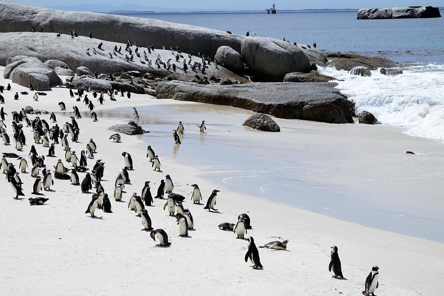 Colonia di pinguini - Boulders Beach, Table Mountain National Park