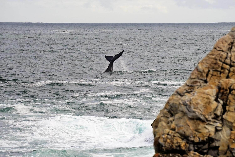 Hermanus - avvistamento balene